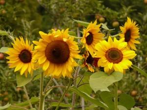 bred-6blomster-flower-635